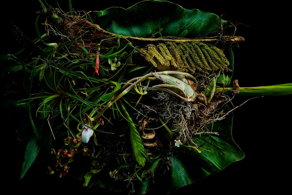 Botanical Sculpture of Amazon by Makoto Azuma