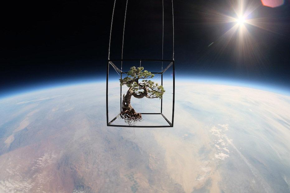 EXOBIOTANICA - BOTANICAL SPACE FLIGHT by Makoto Azuma