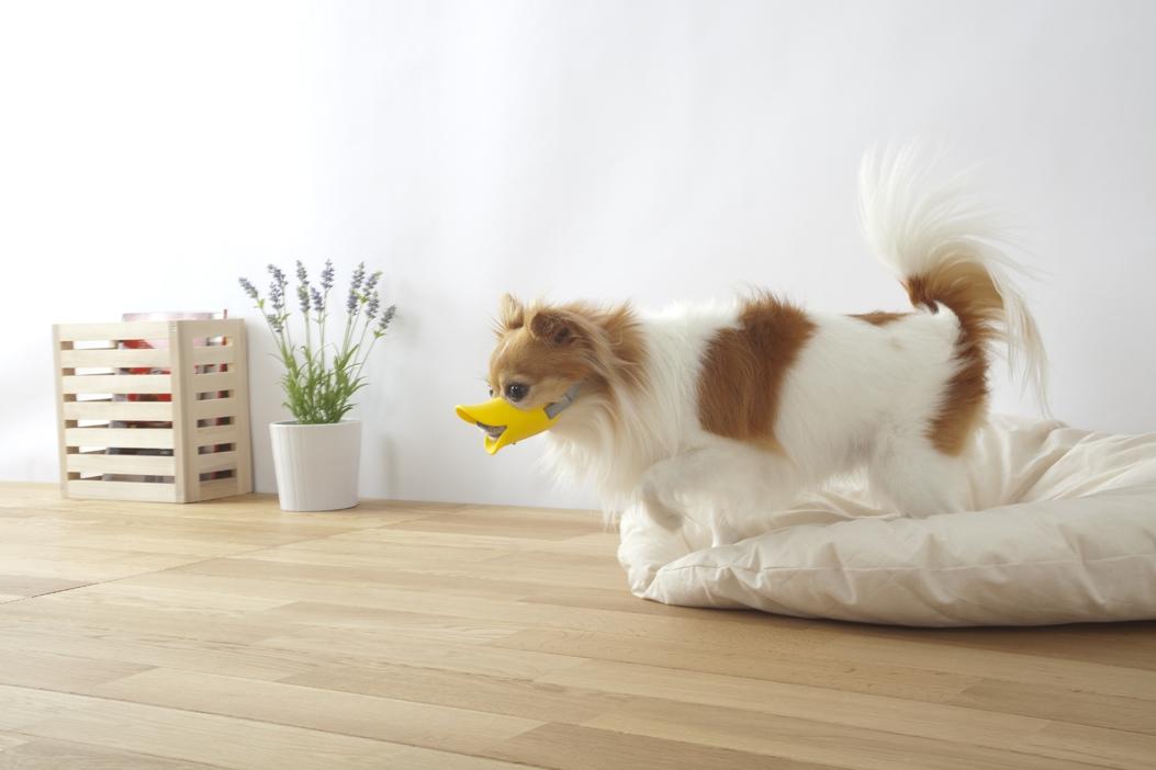 Quack - Dog muzzle designed by Japanese brand Oppo